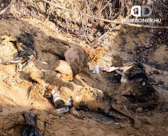 Kutyák tömegsírokban Hajdúsámson külterületén