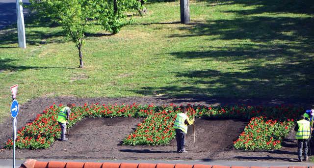 Tócóskert - közmunka - park