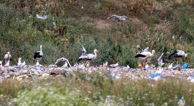gólya - szemét - Tiszafüred