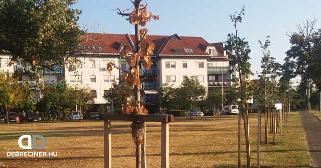 fa - Wesselényi lakótelep