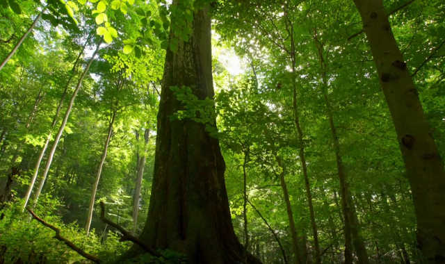 Amiről a fák suttognak