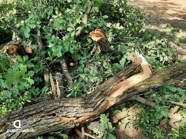 Debreceni Egyetem - leszakadt faág