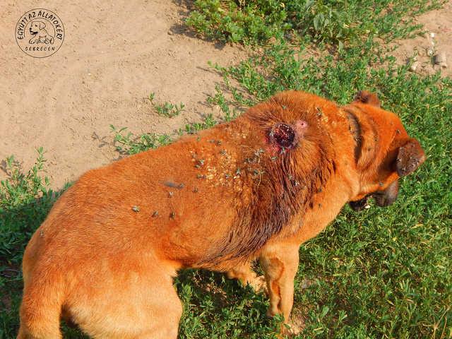 kutya - állatkínzás
