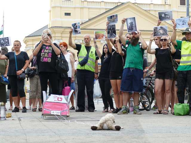 Állatkínzások elleni tiltakozás Debrecenben