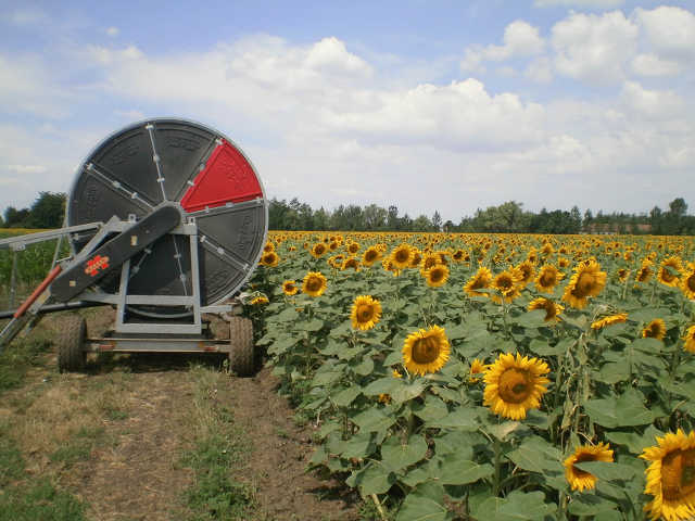 öntözés - mezőgazdaság - napraforgó