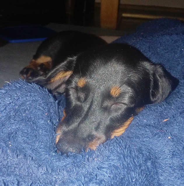 Lulu - kutya