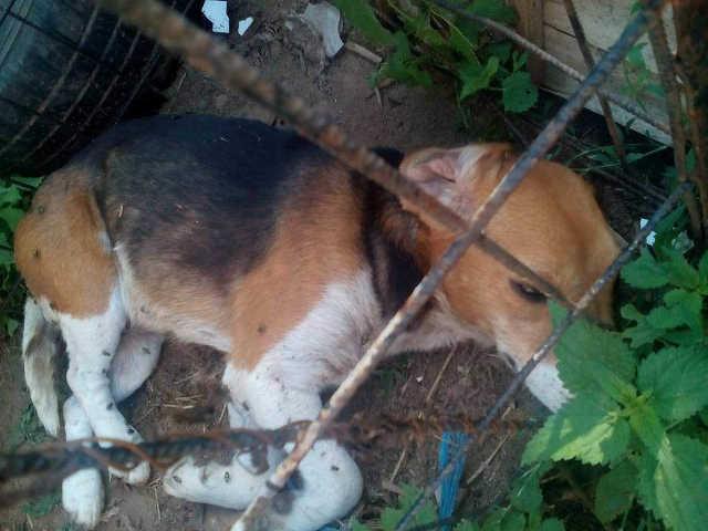 Kutyák a halálsoron