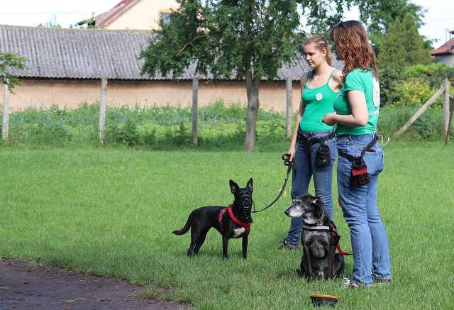 Kismarja - Törő Vanda - kutya